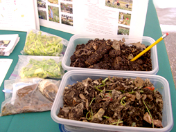 Compost Exhibit at Baum Forum Schools Food and Gardening